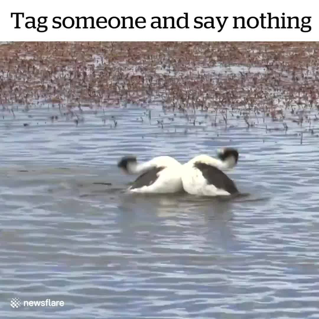 Tag someone and say nothing