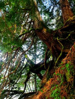 Ancient Great Bear Rainforest