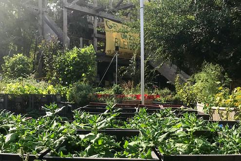 柏林的城市農耕計畫—公主花園