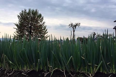 體驗自然農法的旅程