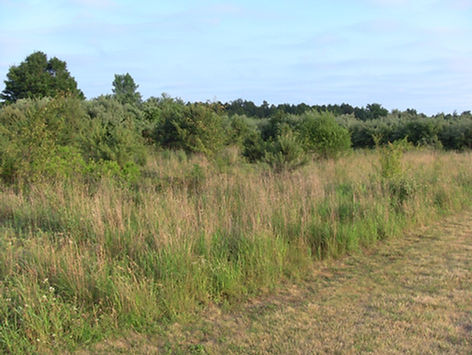 edgewoodfield2.jpg