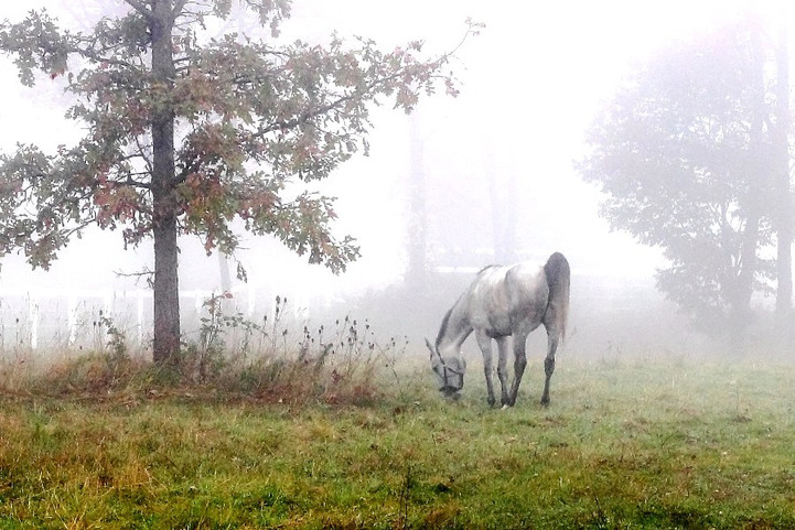 Fogged In - Southern Ontario, Canada