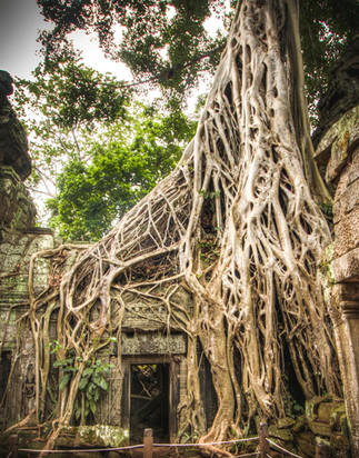 Ta Promh - Cambodia