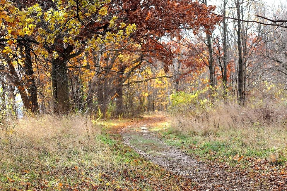Pathway to Borers - Ontario, Canada