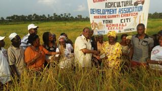 Symbolic harvest on 125 hectare rice farm