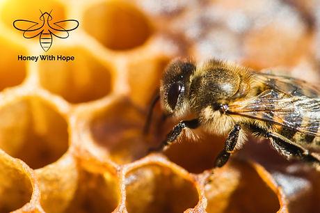 Bee Donation