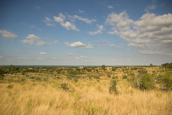 64 hectare of land.jpg