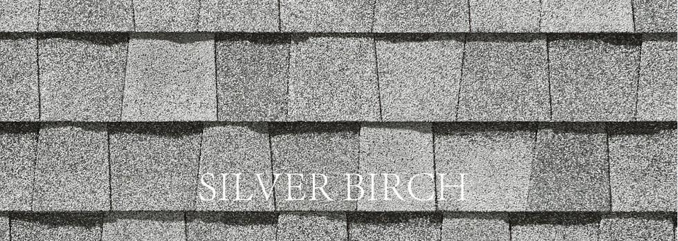 SILVER BIRCH-3.jpg
