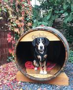 Hund Oechsle im Weinfass