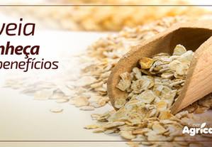 Conheça os benefícios da aveia e porquê devemos inserir esse cereal em nossa dieta.