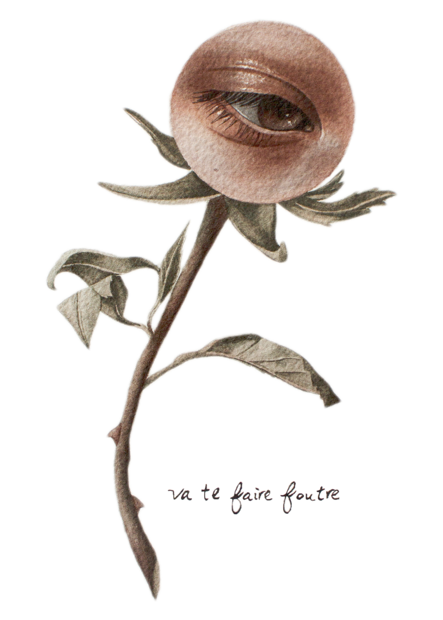 Eye-flower