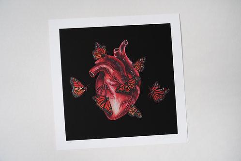 Butterflies and Heart