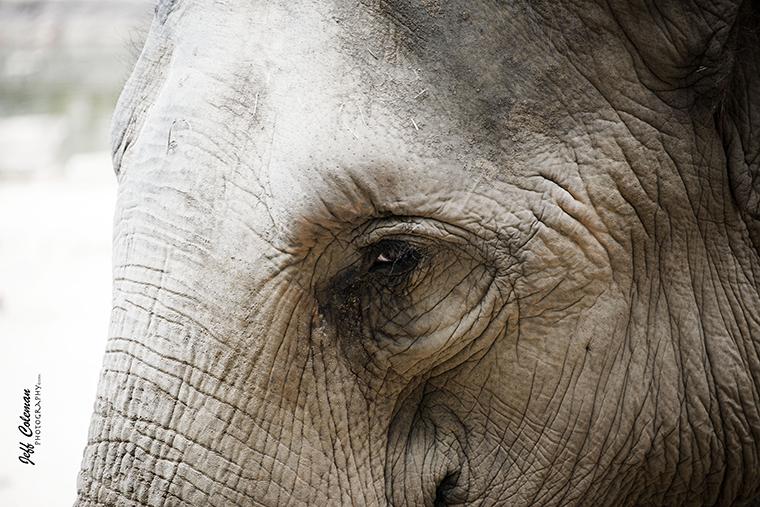 elephant.a