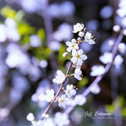 Blossom 4