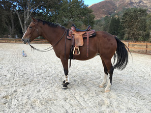 Lola practicing western dressage.jpg