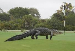 Golf-Photo_20