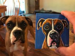 Boxer painting Custom Pet Portrait Samm Wehman Art