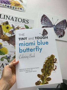 Illustrated a coloring book to promote Miami Blue conservation at the Florida Museum of Natural History