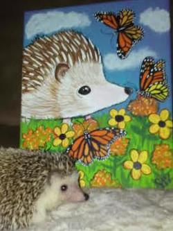 Custom Pet Portrait Samm Wehman Art Hedgehog