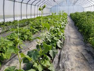 Ouvrier-ère agricole pour la saison 2019