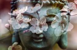 Statue de bouddha avec des fleurs de cerisier