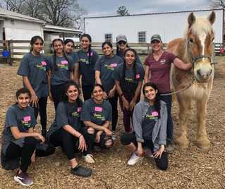 YKG DMV: Women's Museum & Horses!