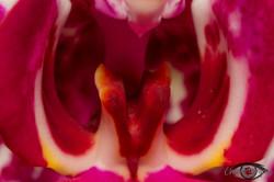 2015-02-02 - IMG_9252 - byChrisArtography