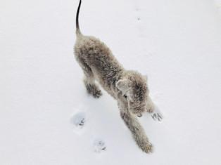 A puppy's first snowfall.