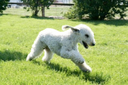 Just out for a trot.