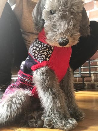 Christmas sweater.