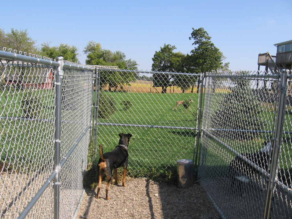 Outside potty kennels