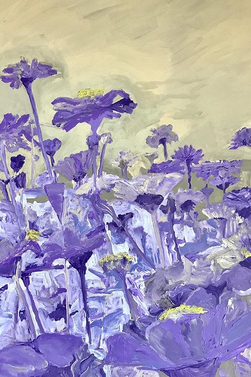 Amazing Flower Fields in the World