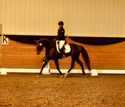 FEI 4 year old Dressage 2015