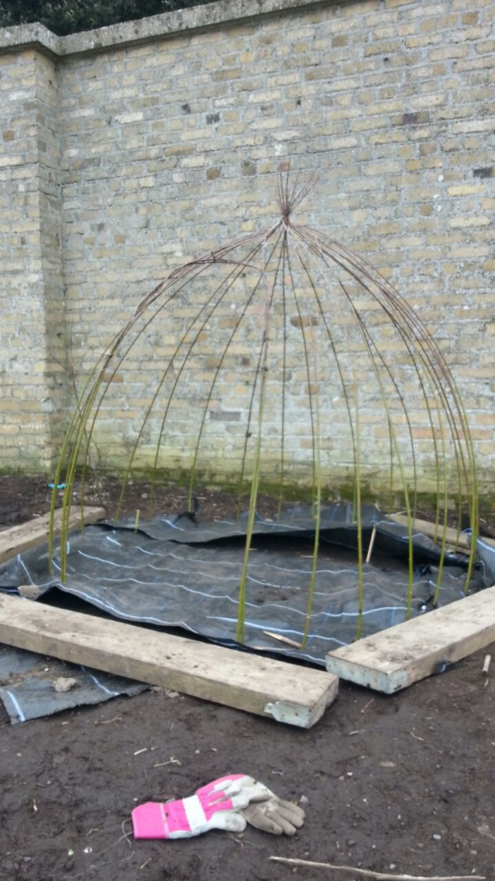 2 Willow Dome