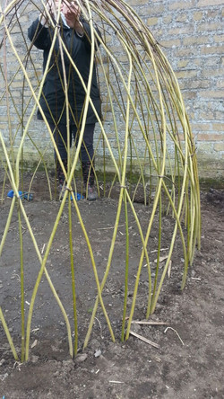 3 Willow Dome 2