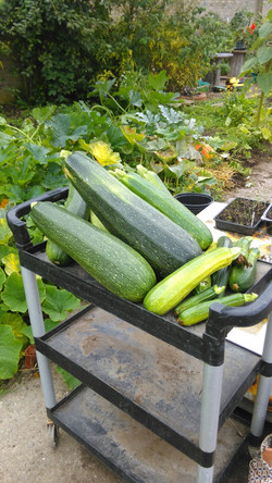 15 Courgettes