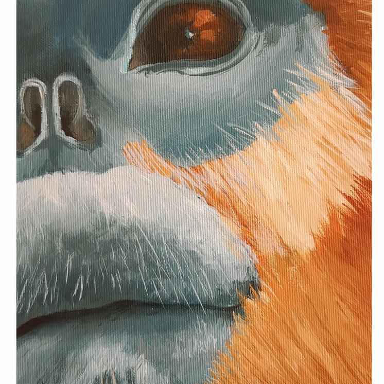 Blue monkeys, close up