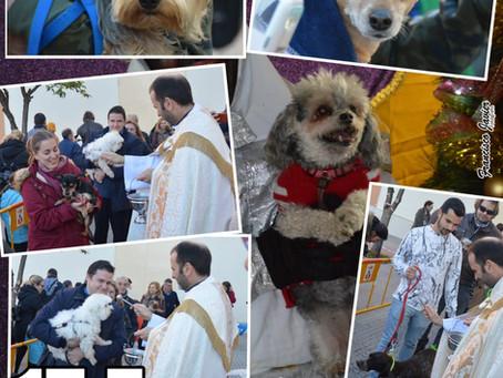 Día 17 de enero San Antonio Abad (patrón de los animales)