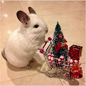 Mouse shopping.jpg