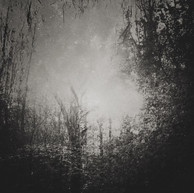 Light in the Shaded Forest