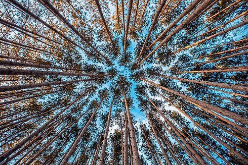 forest_Trees_Vertical_Free-Photos from P
