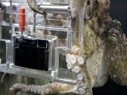 Octopus Spotlight: Rambo, the Photographer Octopus