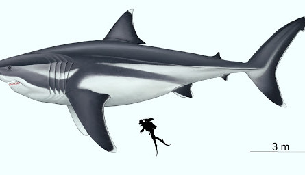 Megalodon ~Big Tooth~