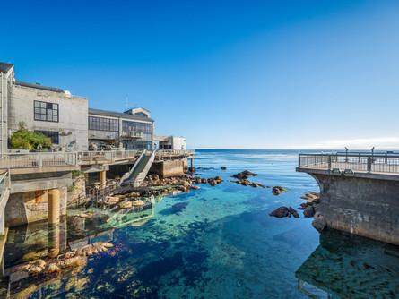 Aquarium Spotlight: Monterey Bay Aquarium
