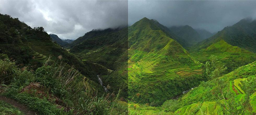 landscape-forest.jpg