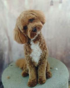 Bailey is just too cute 😍😊.jpg