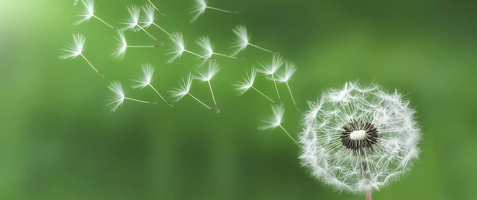 dandelion-green.jpg
