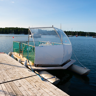 Water Bug Taxi