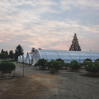 Farm-2-2.jpg