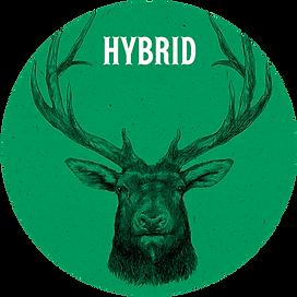 hybrid web circle.png
